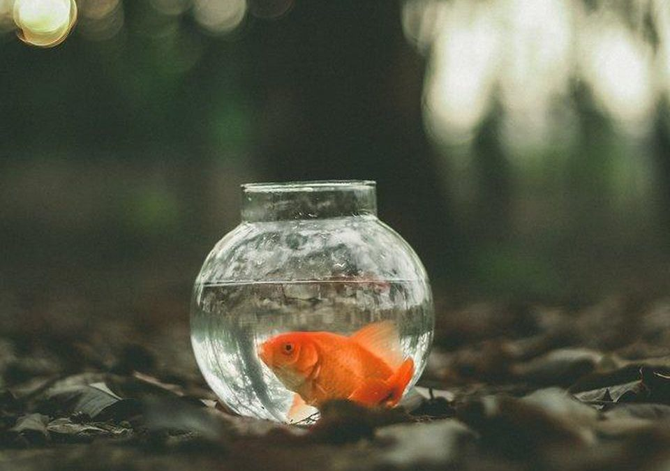 To Achieve Extreme Productivity, Don't Be A Goldfish