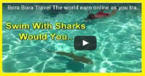 Swim With Sharks In Bora Bora