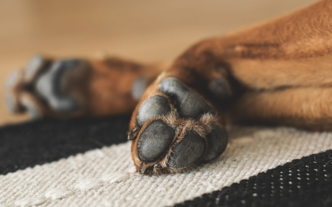 Most Common Health Issues in Dogs