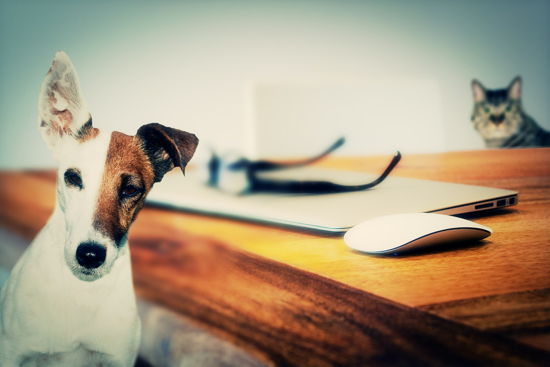 Pet Parents Make Great Home Business Owners