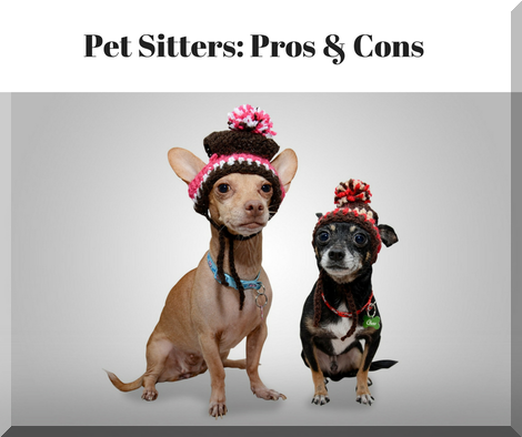 Pet Sitters: Pros & Cons