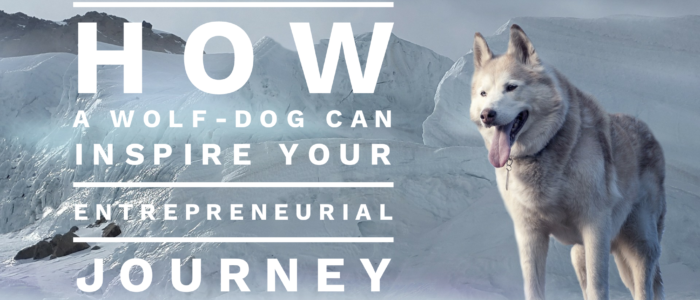 How a Wolf-Dog Can Inspire Your Entrepreneurial Journey