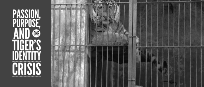 Passion, Purpose, And One Tiger's Identity Crisis