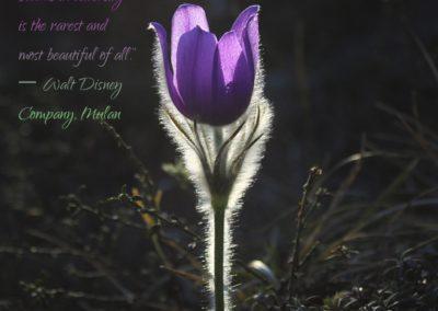 flower-adversity