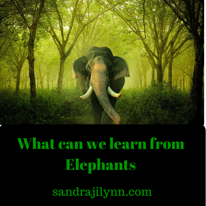 What can we learn from Elephants (2)