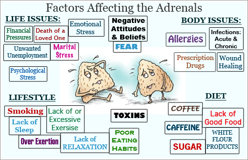 Adrenal Fatigue, What Causes It, continued