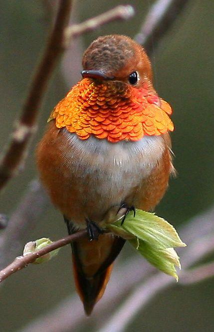 my-bird