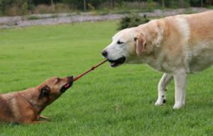 dog-tug-toy