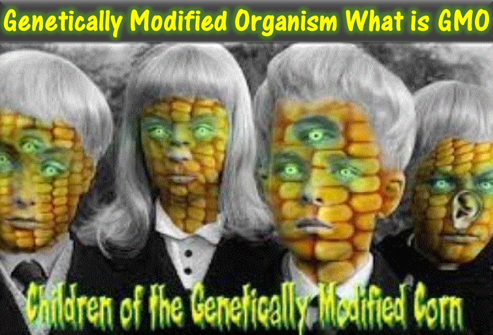 Genetically Modified Organism What Is GMO