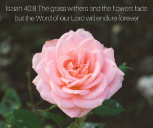 Isaiah 40-8 The grass withers and the flowers fade but the Word of our Lord will endure forever