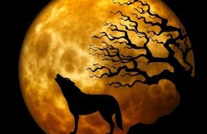 wolf-963081_1280 (1)