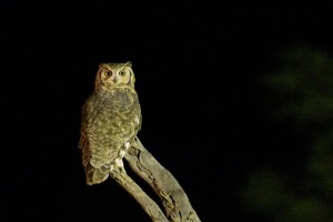 owl-1180732_1280