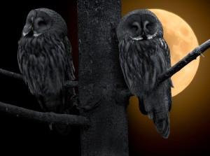owl-706733_1280