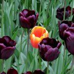 flowers-1575935_640
