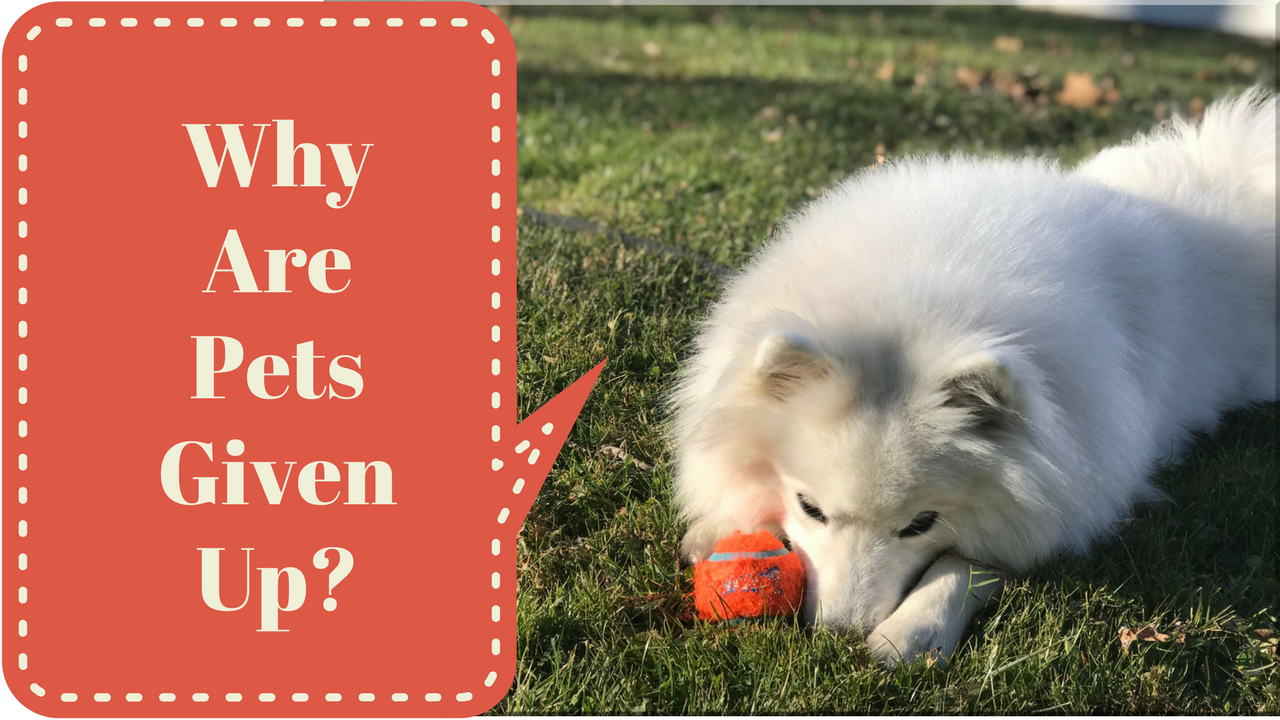 Why Are Pets Given Up?