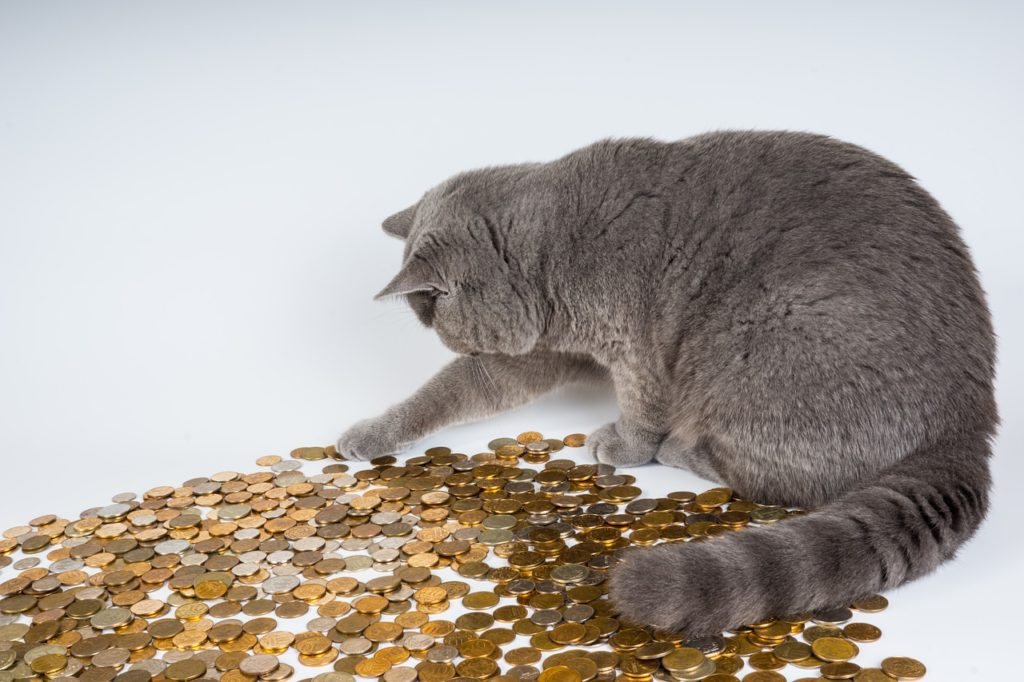 Cat Playing With Money