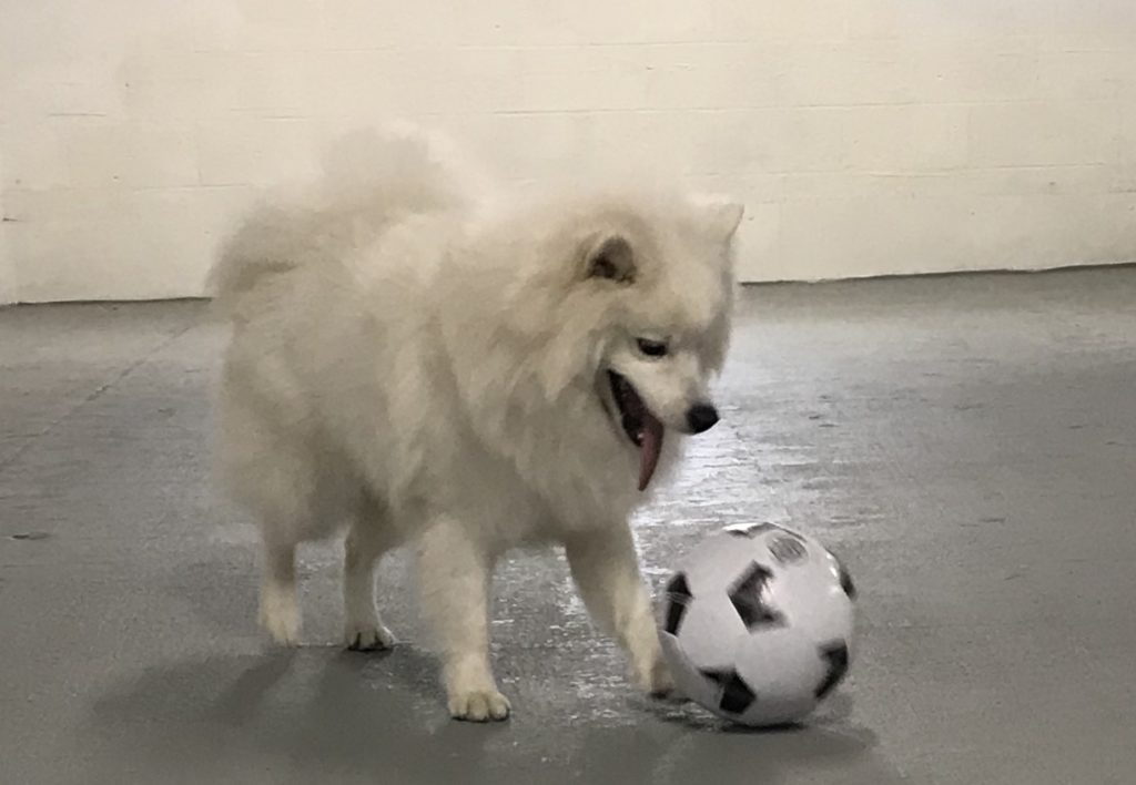 Performance Dog