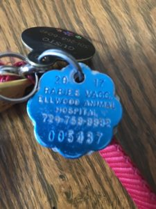 Pet Identification Tag