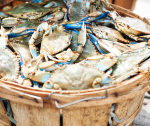 stock-photo-27655939-basket-of-live-bluepoint-crabs