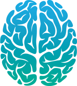 brain_05