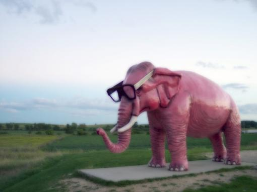 Pink Elephant in the room