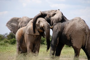 elephant respect june 10