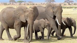elephant listen june 10