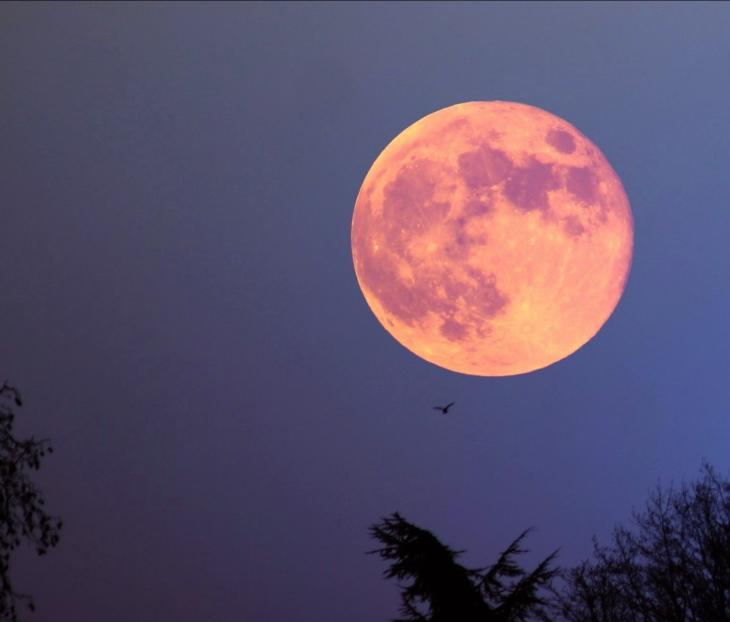 strawberry moon june 24